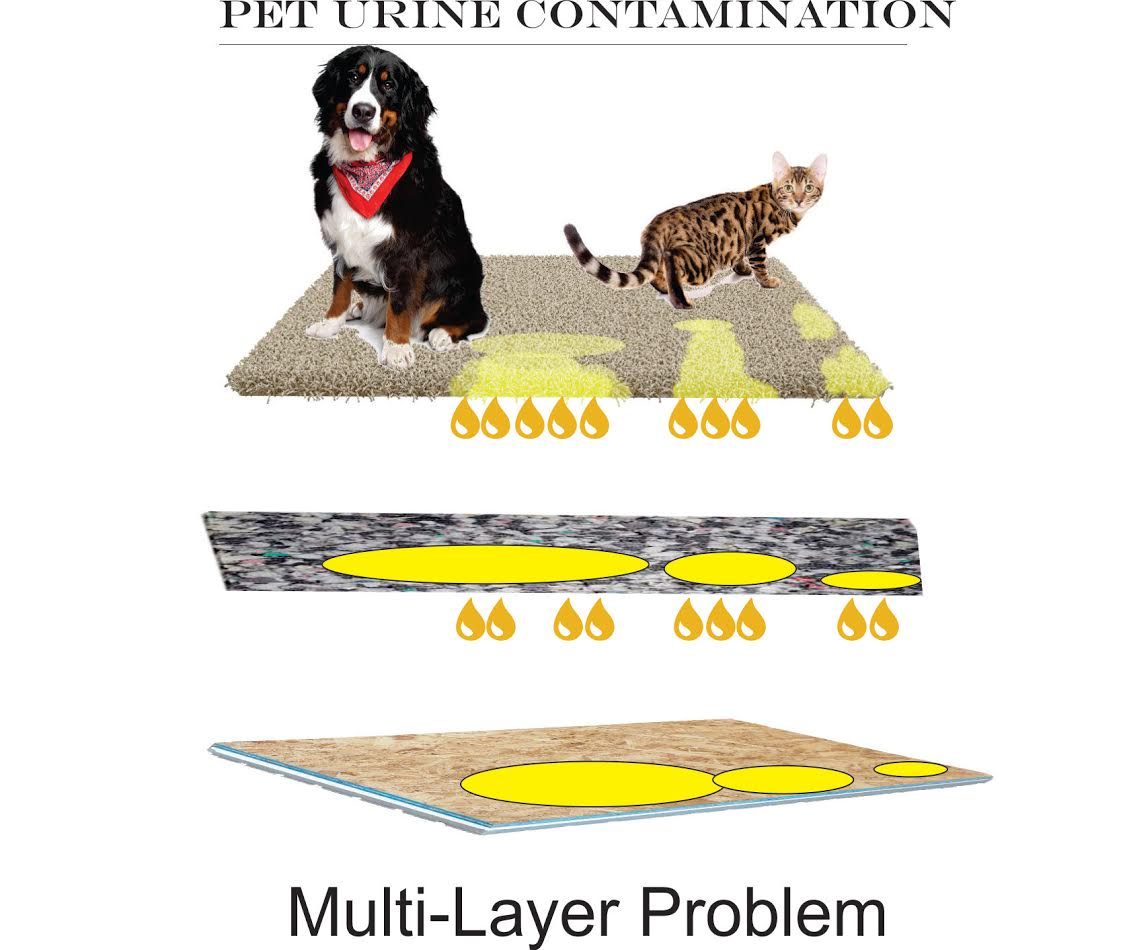 Removing Cat and Dog Urine Contamination In Carpet - All Odors Gone : Guaranteed Odor Removal